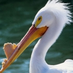 St. Louis Zoo - Stork