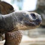 St. Louis Zoo - turtle